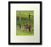 Kangaroos at Pambula Beach Framed Print
