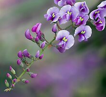 Purple Coral Pea by Margaret Barry