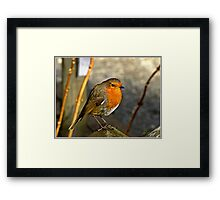 Whenever Sally & I go for a Walk, we always seem to find another little Robin. Framed Print