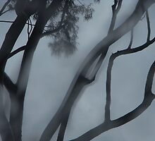 Eucalyptus citriodora - Winter by Debra Hannan