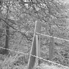 Barbed wire fence by JoCr