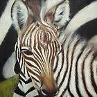 zebra foal by Petra Pinn