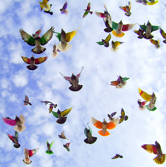 """""""Flight."""" by John  Smith"""