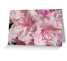 Pink Abundance Greeting Card