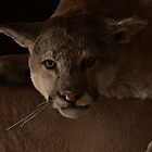 Magnificent Exciting Dangerous - The Mountain Lion by Christine Till  @    CT-Graphics