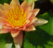 Warm Yellows, Oranges and Corals - a Waterlily Impression Sticker