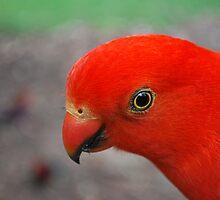 Big Red.  Badgers Creek, Healsville Victoria  by Lozzar Flowers & Art
