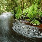 Bird River, Tasmania - 1 by tasadam