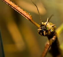 Walking Stick by TheNothing