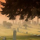 Graves and fog by Cricket Jones