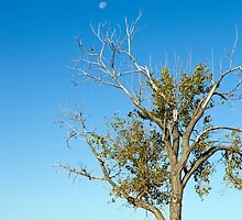 Tree and Daytime Moon by JKunnen