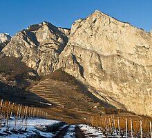 vineyards in the Alps- Swiss by GOSIA GRZYBEK