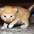 Small cat:)) by misiabe80