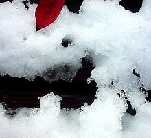 The First Snow and the Last Leaf by Maureen Kay