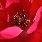 Flower Closeup by richpilot35