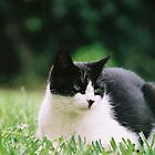 friend's cat by sharath