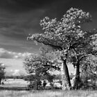 Infrared Boab in Monochrome by Mark Ingram