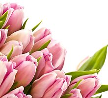 Tulips by christinaree