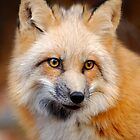 Foxy Lady by McAdooImages