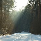 Winter sun rays by Caterpillar