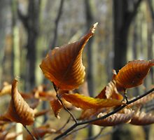 Curled Leaves by ArianaMurphy