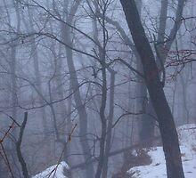 winter fog  by cynthia  brown