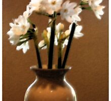 Paperwhites on Paper by Ron McDonald