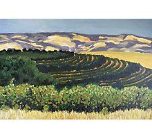 Rosemount Vineyards, McLaren Vale SA Photographic Print