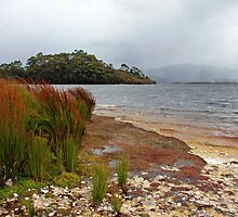Ted's Beach - Lake Pedder, South West Tasmania  by Ruth Durose