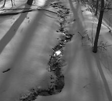 Winter Stream by Michael  Dreese