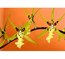 Orchid Dance Photographic Print