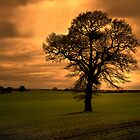 Lone tree at sunset by Martin White