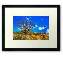 Lone Mesquite along Bronco Creek Trail Framed Print