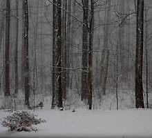 Snowfall in the woodlands '09 by goldnzrule