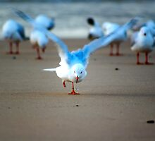 Seagull with one leg by Vince Callaghan