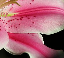 ~Lily's Secret~ by Terri~Lynn Bealle