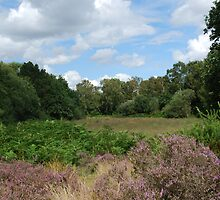 Hartlebury Common, Worcestershire by kingfisher