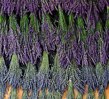 Lavender Drying Rack by Catherine Sherman