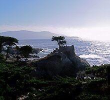 Lone Cypress--Monterey California by John Mckinney