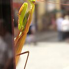 mantis by YamatoHD