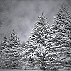 Winter storm by Christina Martin