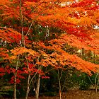 Autumn Beauty by Marylou Badeaux
