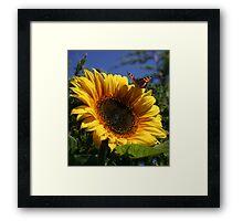 Butterfly & Sunflower Framed Print
