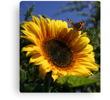 Butterfly & Sunflower Canvas Print
