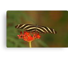 Zebra Longwing 2 Canvas Print