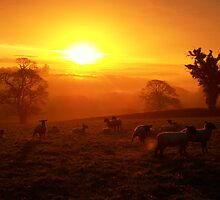 Cornwall: Sheep and the Sunrise by Rob Parsons