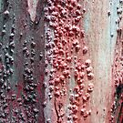 Tree Bark, Lorne by Roz McQuillan