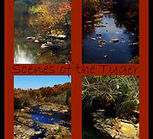 Scenes of the Tyger by Lisa Taylor