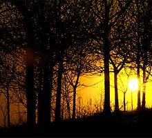 Sunset through the trees, Tandle Hills, Royton, Lancashire by newbeltane