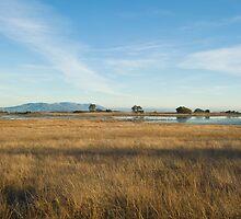 Santa Rosa Plateau Reserve vernal pool by David Jones